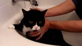 Felix Tuxedo Cat Whines and Meows while Sad in Bath!