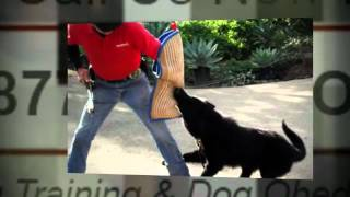 Private Dog Training Lessons Chula Vista Ca Dog Trainers