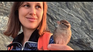Couple rescues wild sparrow. Now she refuses to leave.