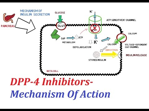 DPP-4 Inhibitors - Mechanism Of Action