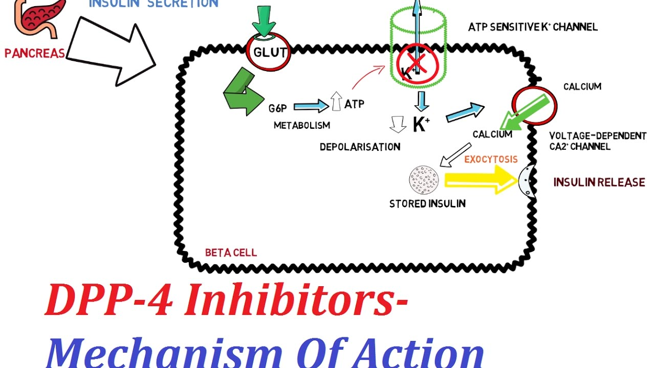 maxresdefault dpp 4 inhibitors mechanism of action youtube dpa diagram for ford 3600 at edmiracle.co