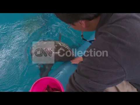 AGE OF CHINA: SAVING THE FINLESS PORPOISES