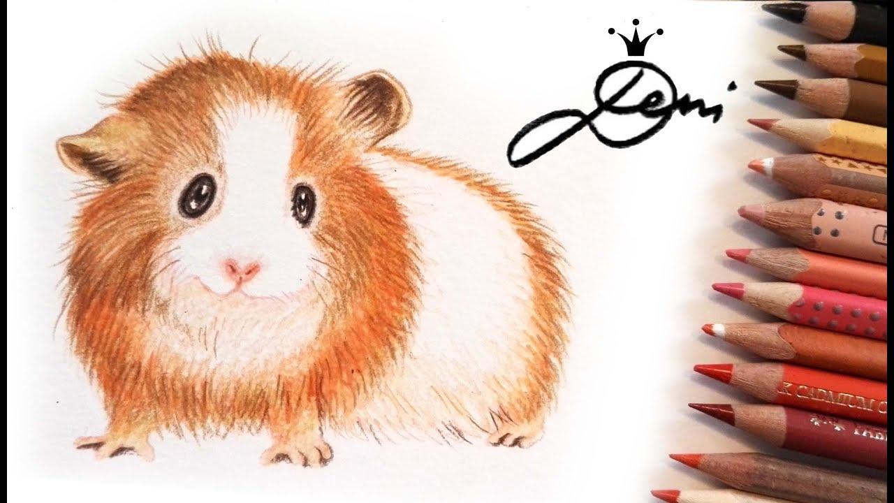 🐹 Meerschweinchen zeichnen 🐹How to draw a domestic Guinea pig - Cavy🐹  Kак се рисува морско свинче