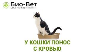 У кошки понос с кровью.  Ветеринарная клиника Био-Вет.
