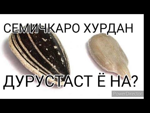ХОЧИ МИРЗО (СЕМИЧКАРО ХУРДАН ДУРУСТАСТ Ё НА)