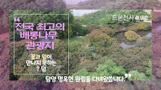 전국 최고의 배롱나무(백일홍나무) 관광지 명승 제58호…