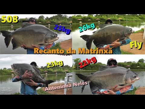 Recanto da Matrinxã - Pescaria ANIMAL com muitos gigantes no fly e anteninhas - Fishingtur 508