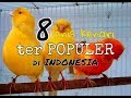Jenis Kenari Terpopuler Di Indonesia  Mp3 - Mp4 Download