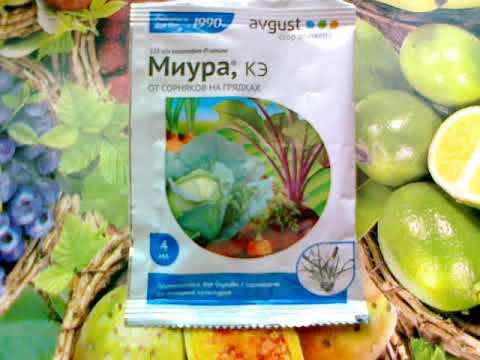 Миура- гербицид для борьбы со злаковыми сорняками.