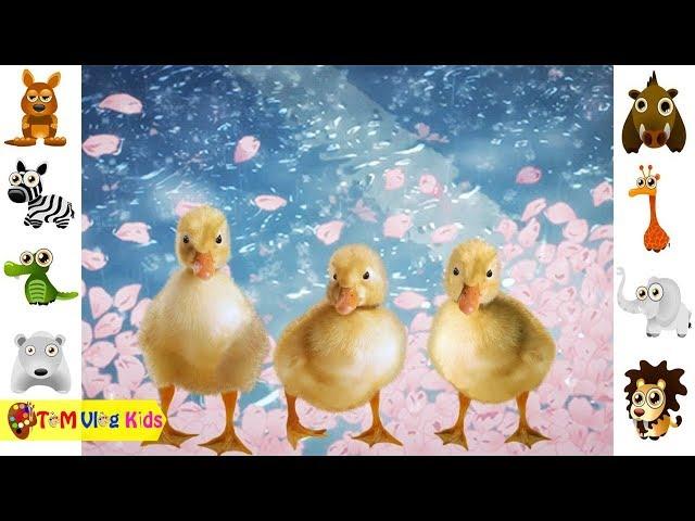 Bé Học Nhận Biết Con Vật   Bé Tập Nói  TOM Vlog Kids