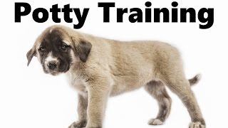 How To Potty Train An Anatolian Shepherd Puppy - Kangal House Training - Anatolian Shepherd Puppies