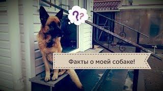 Интересные факты о моей собаке/Сколько ей лет?/ Dog?/How old is her?/