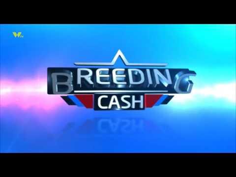BREEDING CASH; PIG FARMING IN KIAMBU TING'ANG'A