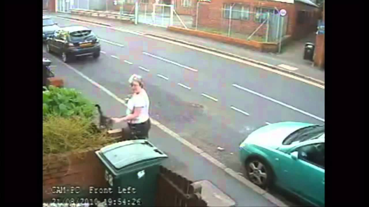 Woman throws cat into wheelie bin