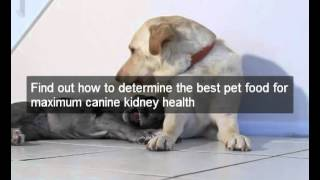 Help To Reverse Kidney Disease In Dogs! Great Scientific Diet Dog Food Fights Kidney Disease In Dogs