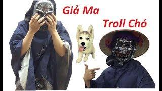 Hữu Nhân - ( ghost troll dog ) Đóng Giả Ăn Mày Ma Thử Lòng Cún Alaska - Samoyed - Corgi