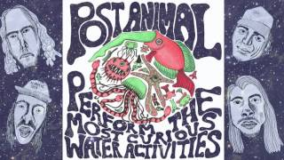 Post Animal Perfom the Most Curious Water Activities
