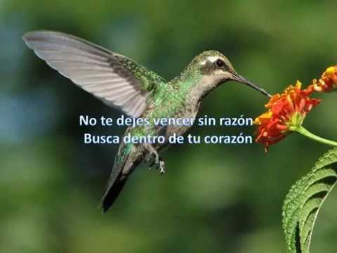 Sigue que tu fe nunca muera