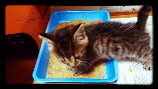 Котёнок Васька 1 месяц / Cat Vasya