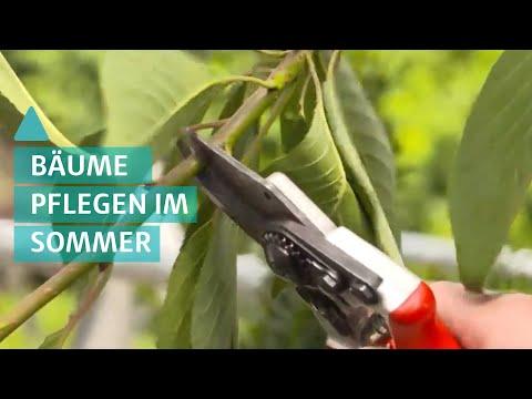 BAUEN & WOHNEN: Gartenbäume im Hochsommer pflanzen und gießen