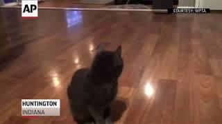 Wayward cat rescued from Indiana dam