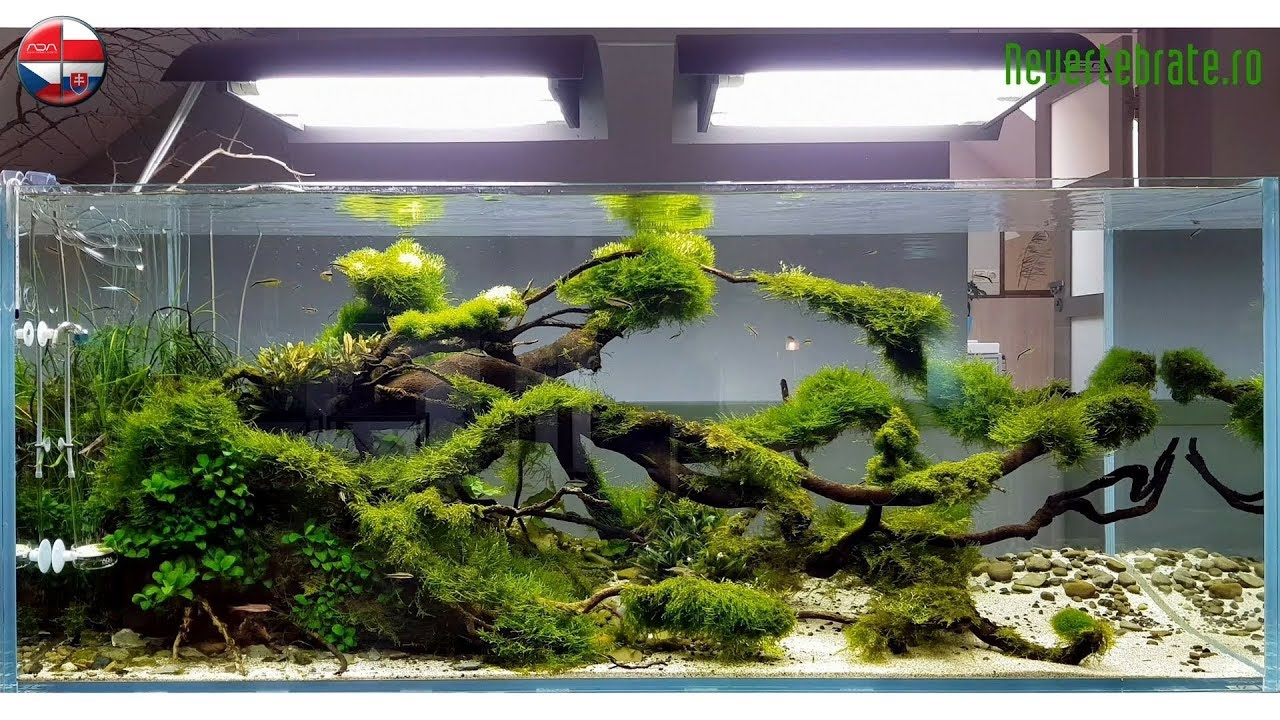 Aquascape ADA Idea Studio Poland - YouTube