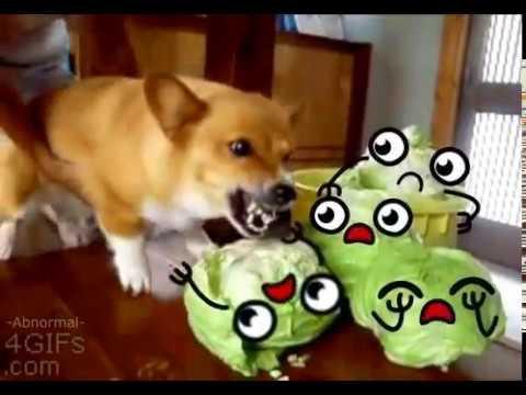 гифка собака жрет капусту рецепт