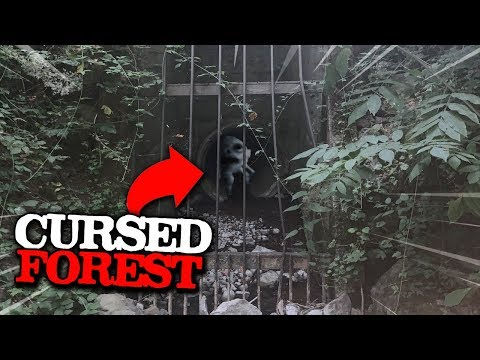 this shouldn't be here.. (Cursed Forest)