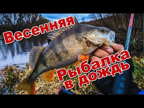 Рыбалка в дождь | Ловлю окуня и щуку в начале весны | Спиннинг на сломе погоды