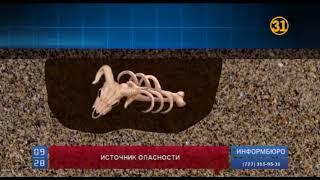В ЮКО пытаются предотвратить вспышку сибирской язвы