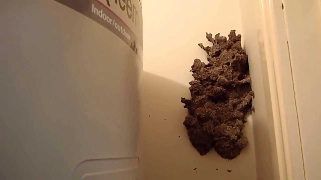 Large Termite Mudpack Nest Inside Home Youtube