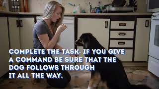 7 Tips on Dog Training