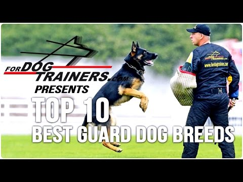 Top 10 Best Guard Dog Breeds - ForDogTrainers Top 10 Chart 🐕