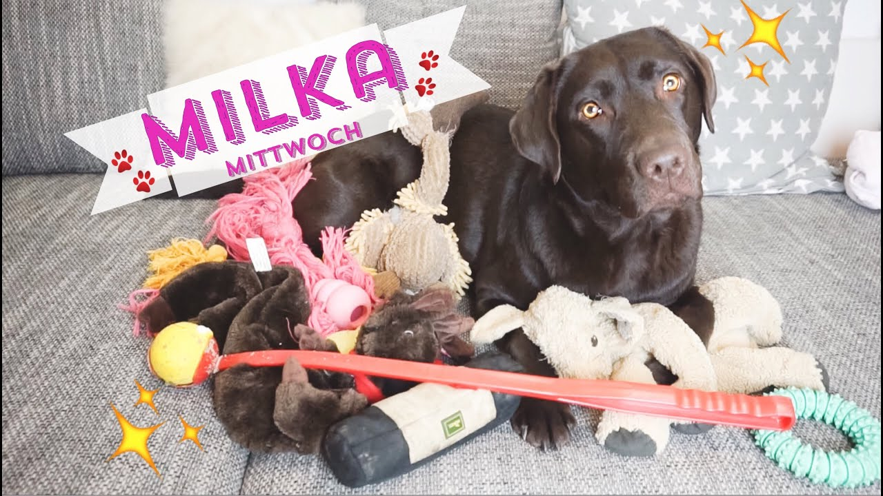 Milka Mittwoch Spielzeug Haustier Tag Haul Hund Labrador
