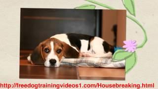 Fastest Crate Training Adult Dog Program