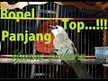 X Putar Langsung Nyaut Suara Burung Trucukan Pancingan Ropelan Suara Jernih  Mp3 - Mp4 Download