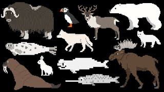 Arctic Animals - The Kids' Picture Show