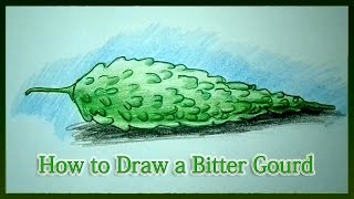 How to Draw a Bitter Gourd Step by Step