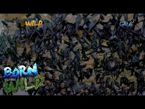 Born To Be Wild: Thousands Of Swiftlet Birds Residing In A Private House