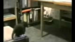 Кошки . Доброе старое видео.Для детей.Cat . Good old video.For children.