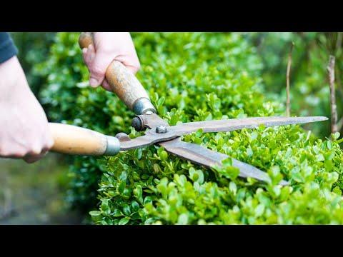 Вопрос: Во второй половине февраля какие можно обрезать декоративн кустарники?