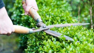 Видео-урок по обрезке деревьев и кустарников для начинающих. Как правильно обрезать деревья и кусты.