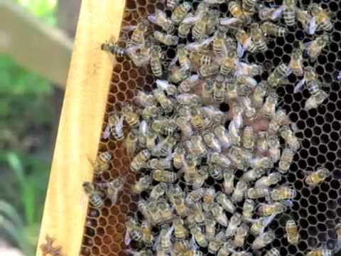 Bohol Bee Farm Craft & Livelihood 2009