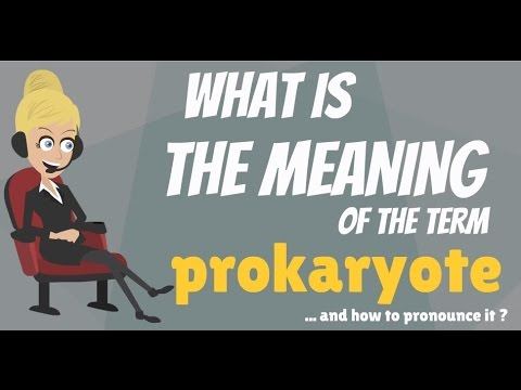 What is PROKARYOTE? What does PROKARYOTE mean? PROKARYOTE meaning, definition & explanation