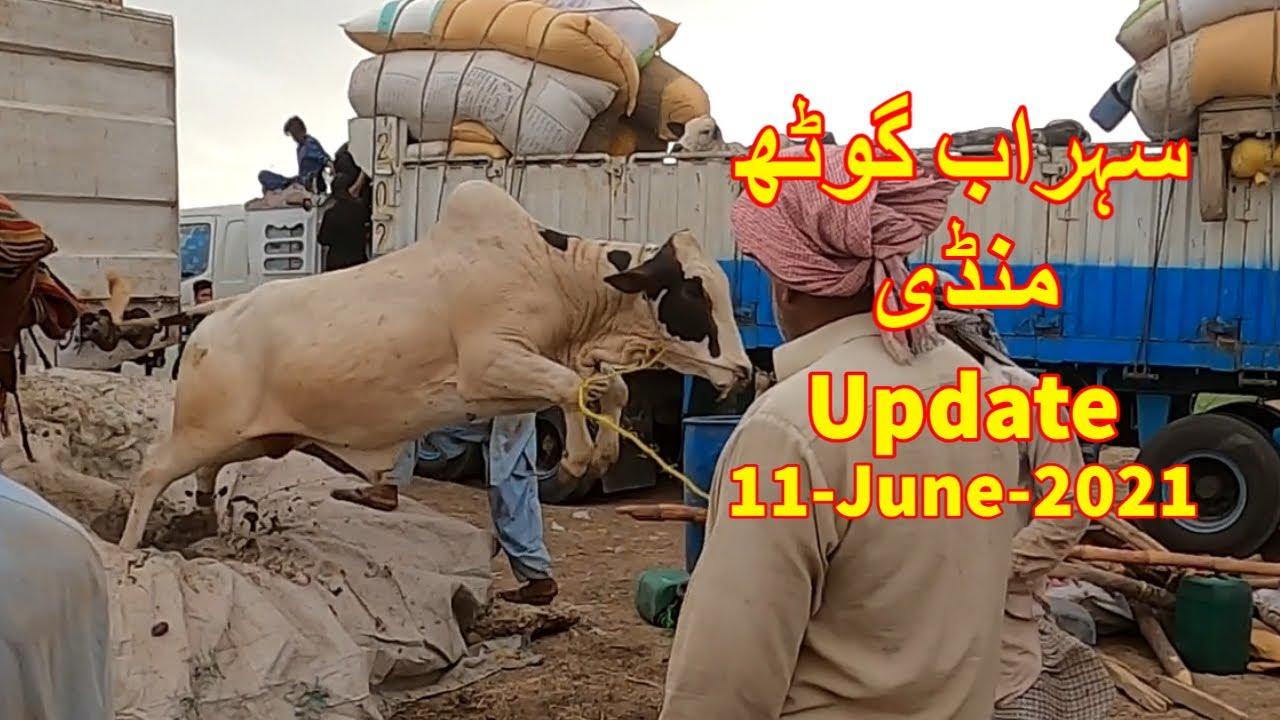 Cattle Unloading and Update Sohrab Goth Maweshi Mandi