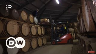 İskoç viskisi Brexit kıskacında - DW Türkçe