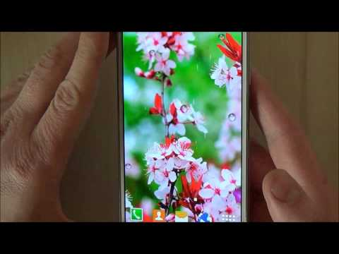 Cherry Blossom Live Wallpaper Aplikasi Di Google Play