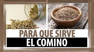BENEFICIOS Y PROPIEDADES DEL TE DE COMINO | PARA QUE SIRVE EL COMINO