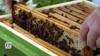 Bienen auf der Landesgartenschau