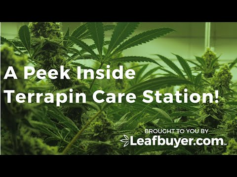 Terrapin Care Station - Dispensary Highlight